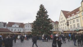 Christmas in Tallinn. Christmas tree at the Town Hall Square in Tallinn stock video footage