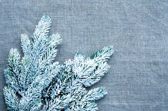 Christmas template framework with snow pine branch Royalty Free Stock Photos