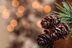 Close up. Spruce branch with small fir cones. Blurry lights of garland on the background. Christmas theme, card. Close up. Spruce branch with small fir cones stock photo