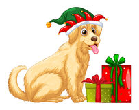Christmas theme with cute dog and presents Royalty Free Stock Photos