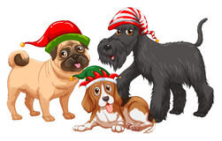Christmas theme with dogs wearing christmas hats Stock Photos