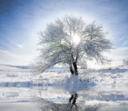 Christmas theme- frozen trees Royalty Free Stock Images