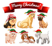 Christmas theme with many dogs Royalty Free Stock Photo