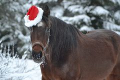 Christmas themed horse. Horse with a brownie& x27;s cap royalty free stock photo