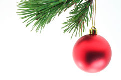 Christmas Time. A christmas ball hanging off of a pine branch Royalty Free Stock Photography