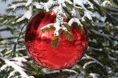 Christmas time. Red Bauble on Christmas Tree with Reflection Stock Photos