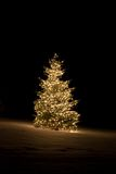 Christmas Time. Pine tree outside lit up with Christmas lights Stock Photos