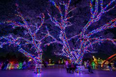Christmas Lights Sparkle at Vitruvian Park in Addison Texas. Christmas time in Addison Texas as lights fill the trees at Vitruvian Park royalty free stock image