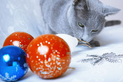 Christmas time for cat Royalty Free Stock Photography