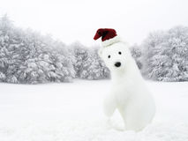 Christmas time. White bear in snowy field. White bear with Santa hat in snowy field stock images