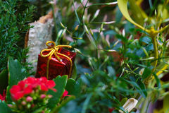 Christmas tiny red present in plant. Christmas ornament : tiny red present in green plant Stock Photos