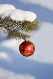 Christmas toy on a branch Royalty Free Stock Images