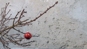 Christmas toy on a dry fir tree branch. Stock Photos