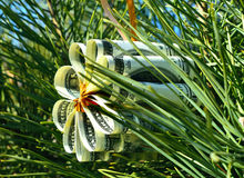 Christmas toy flower made of dollar bills on the branch of spruce Royalty Free Stock Photos