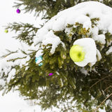 Christmas toy with icicle covered with snow hanging on spruce Stock Images