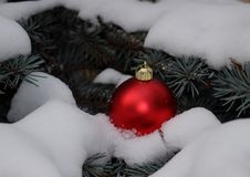 Christmas toy red ball on fluffy snow on a branch of blue spruce Stock Images