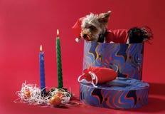 Christmas toys. Decorative dog sitting in Christmas Box Stock Image