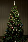 Christmas-tree Stock Photography