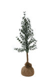 Christmas Tree. A young christmas tree in a satchel type bag Stock Image