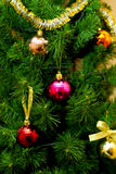 Christmas Tree. In the New Year festive Christmas tree embellish every home Stock Photography