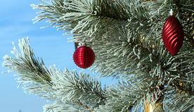 Christmas tree. Snow-covered pine with red New Year's toys Stock Image