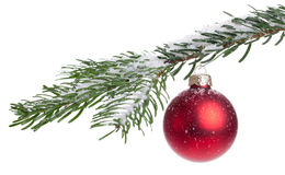Christmas Tree. Isolated branch of a christmas tree with one red bauble Royalty Free Stock Images
