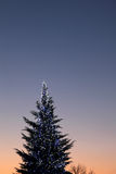 Christmas tree. Lighted Christmas tree on a winter night Stock Photos