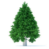 Christmas tree. Undecorated Christmas tree over white - 3d render illustration Stock Photo