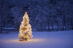 Christmas Tree. A lite Christmas Tree in a field with a river and forest in the background Stock Image