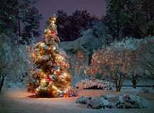 Christmas tree. Snow covered outdoor Christmas tree with multicolored lights royalty free stock photography