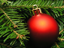 Free Christmas Tree Stock Image - 251311