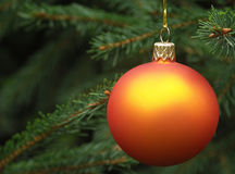 Christmas tree. Orange Christmas ball hanging on a Christmas tree Stock Photography