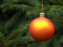 Christmas tree. Orange Christmas ball hanging on a Christmas tree Royalty Free Stock Photography