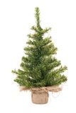 Christmas tree. On the white stock image