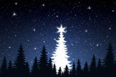 Free Christmas Tree Royalty Free Stock Photography - 370407