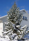 Christmas Tree. Complete with snow and decorations stock image