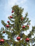 Christmas tree. Outdoor in daytime, close up Stock Photos