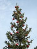 Christmas tree. Outdoor in daytime, close up Royalty Free Stock Photos