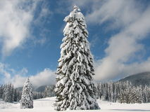 The Christmas Tree Royalty Free Stock Photos
