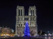 Free Christmas Tree At Notre Dame De Paris Stock Photography - 63626272