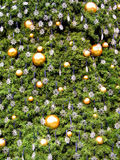 Christmas tree background 1 Stock Image