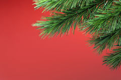 Christmas Tree Background. A Christmas tree branch with a red background Royalty Free Stock Photography