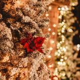 Christmas tree background and Christmas decorations with light, blurred, bokeh, glowing. Happy New Year and Xmas theme, selective focus royalty free stock photography