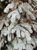Christmas tree background. Royalty Free Stock Photos