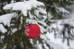 Christmas tree, background Royalty Free Stock Photo