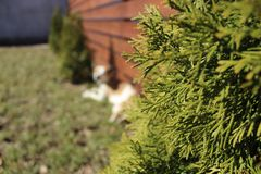 Christmas tree on the background of the fence royalty free stock photography