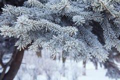 Christmas tree background snowy Stock Photo