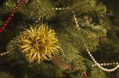 Christmas tree backgrounds with decorative element. Christmas tree backgrounds and decorative element royalty free stock photography