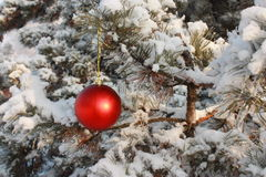 Christmas Tree Ball Decoration - Stock Photo Stock Image
