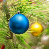 Christmas tree balls. On the green branches of trees Stock Photos